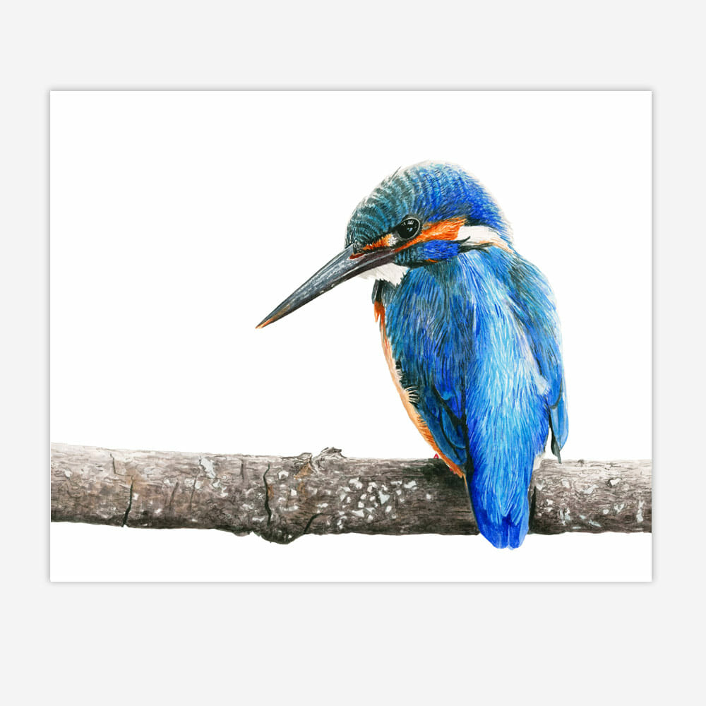 How to paint a vibrant Kingfisher bird (forget the limited ...
