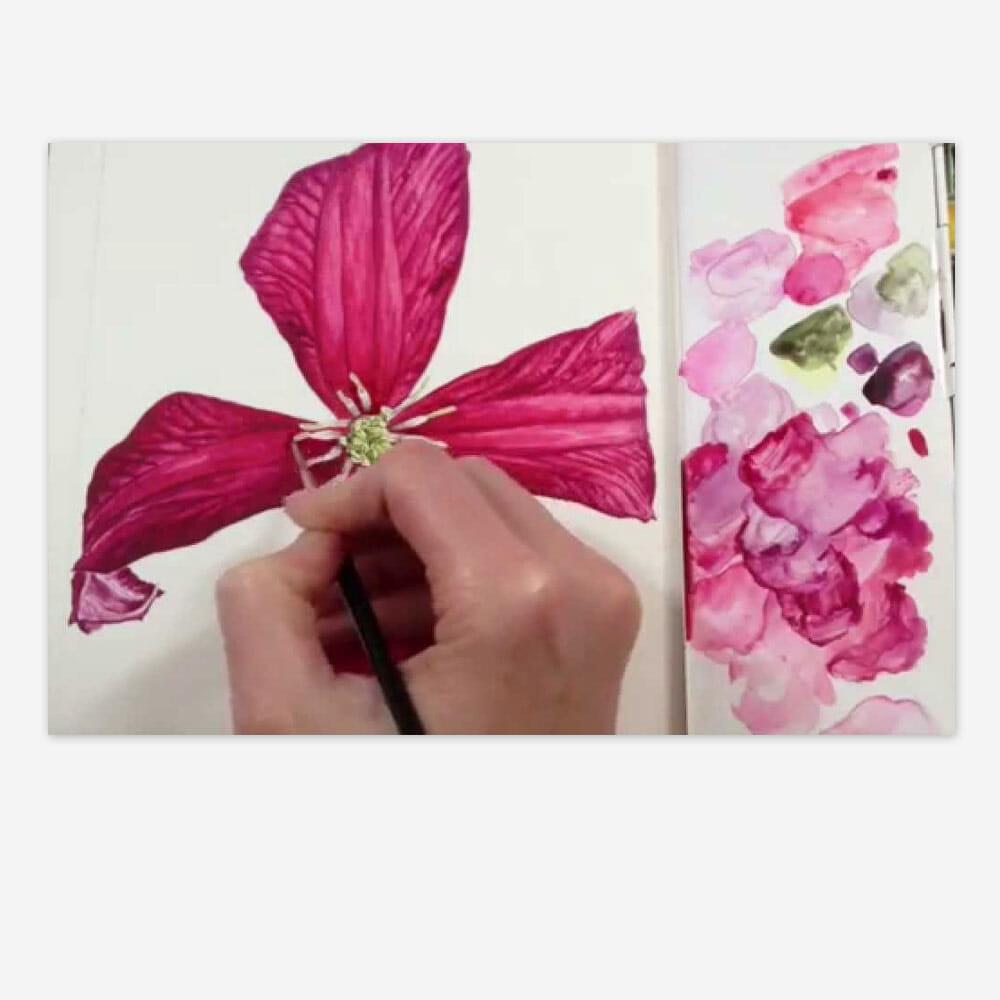 Clematis Flower Stamens
