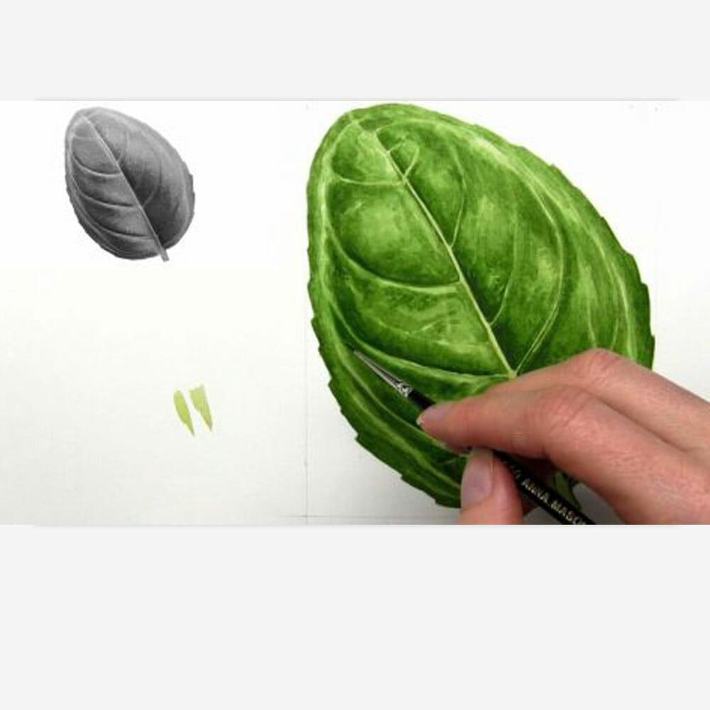 3D Tone Basil Leaf