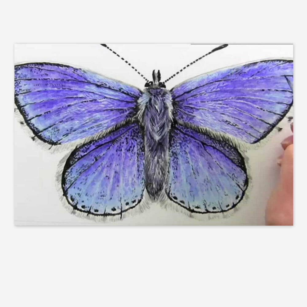 Realistic Blue Butterfly