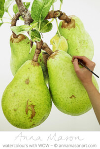 Pears for Artists and Illustrators magazine
