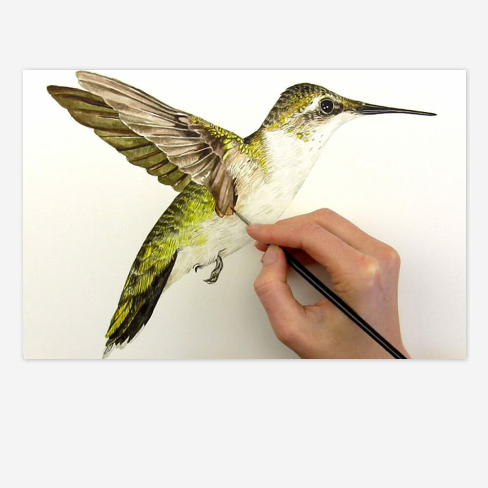 Realistic Feathers Hummingbird