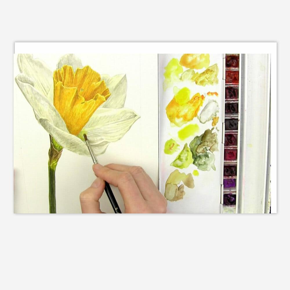 Shadows Yellow Daffodil