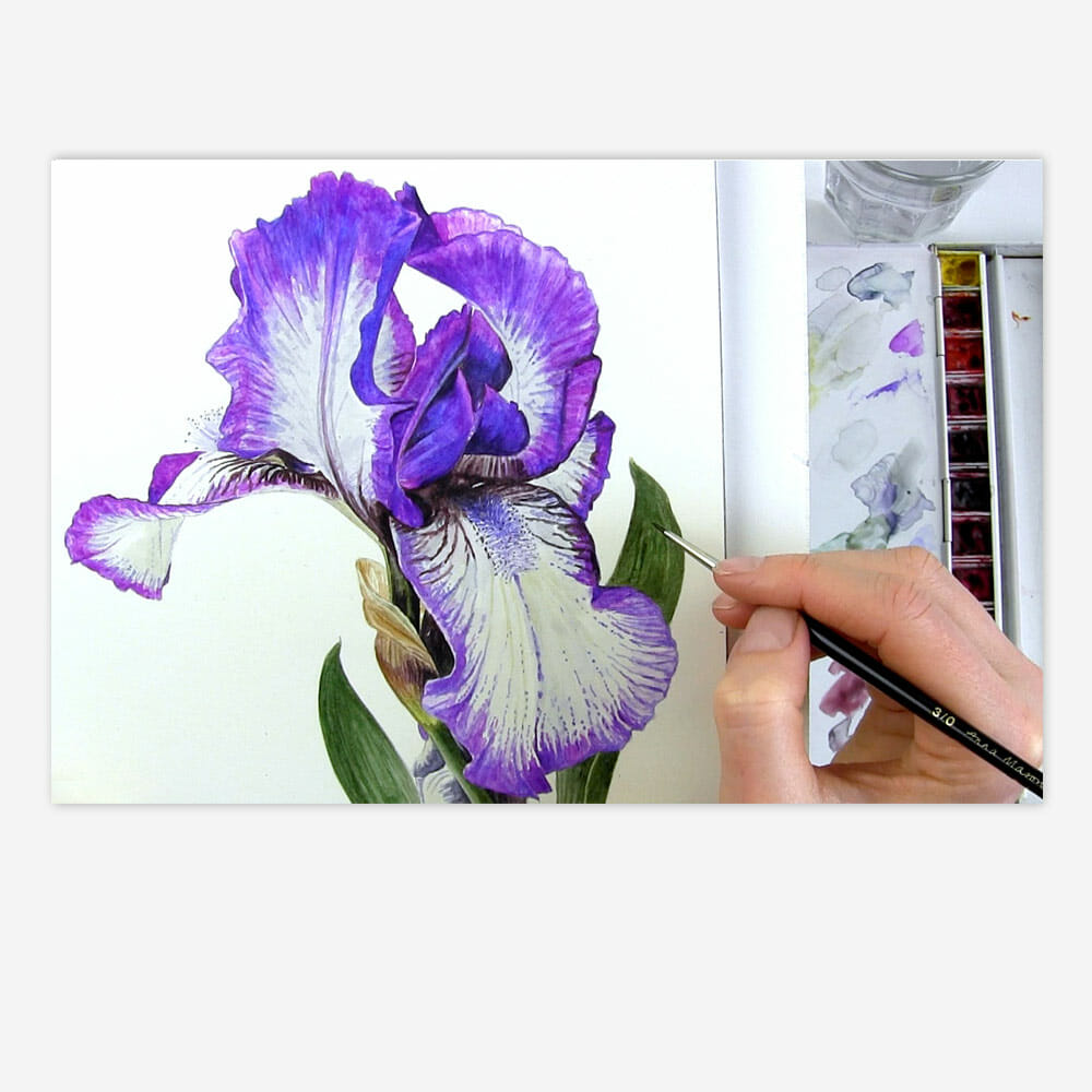Patterned Bearded Iris