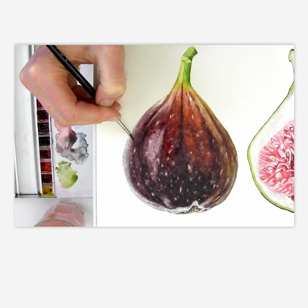 Velvety Fig