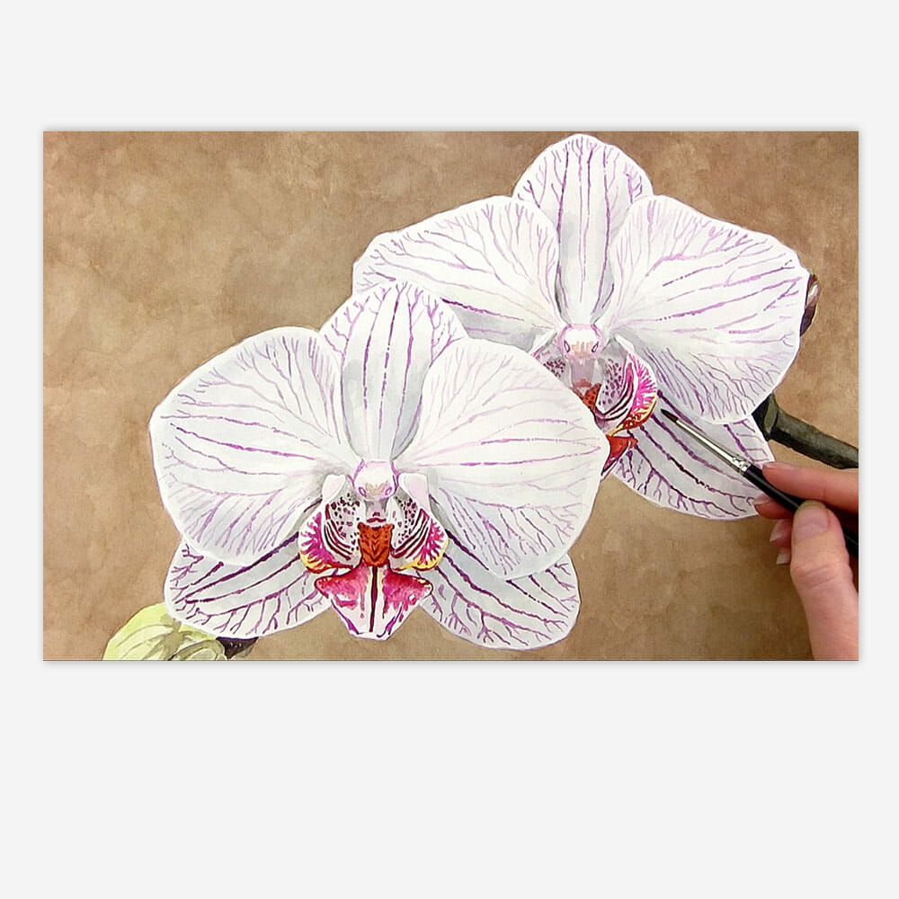 Stripy Patterned Orchid