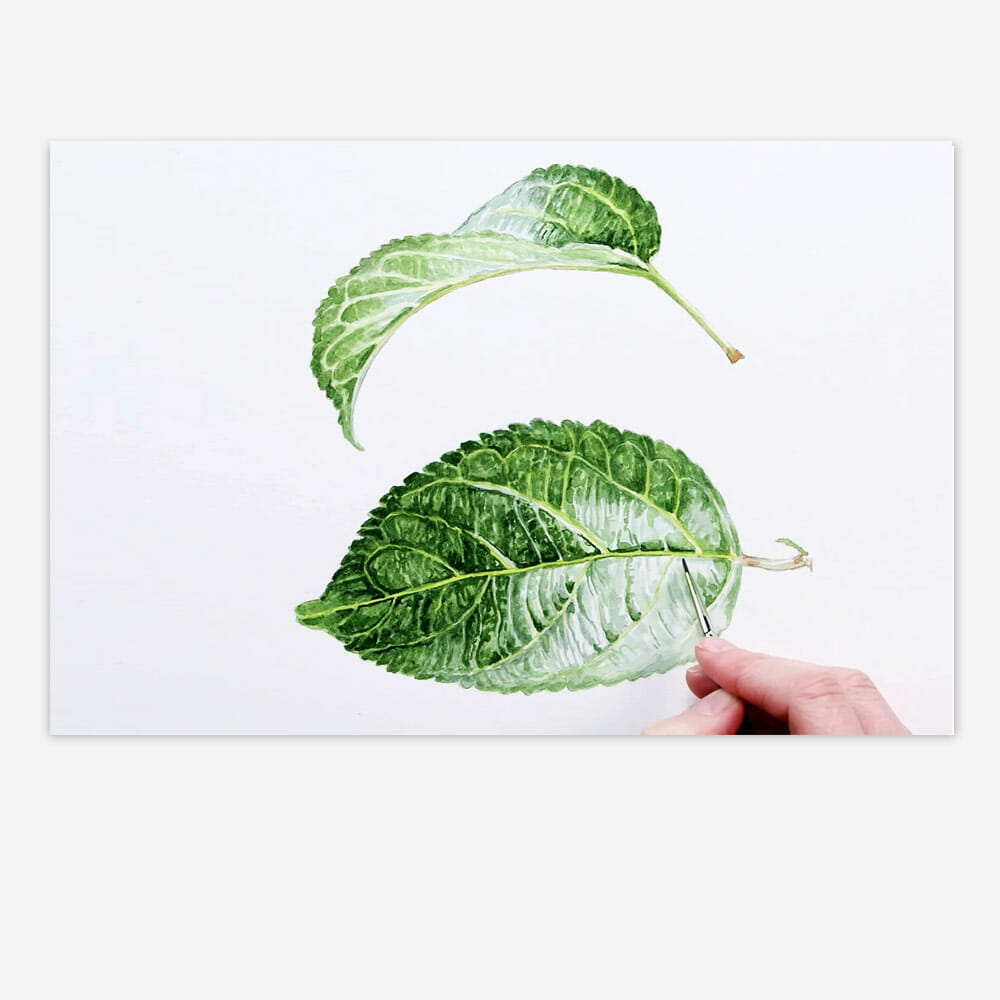 Realistic leaves paint watercolour