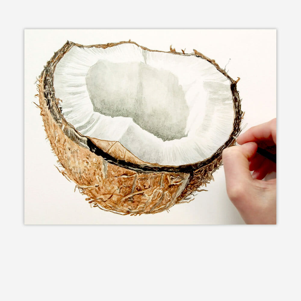 Realistic watercolour coconut texture hairy