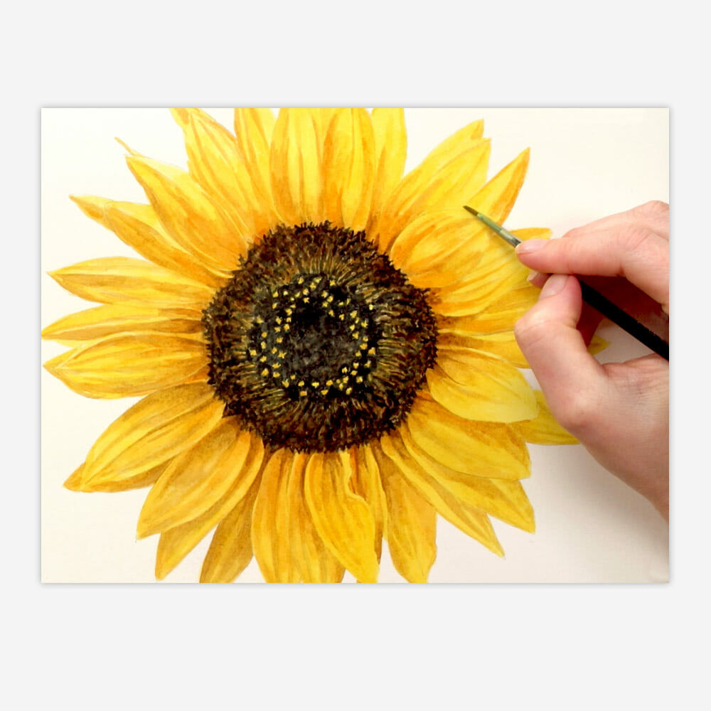 Realistic watercolour sunflower