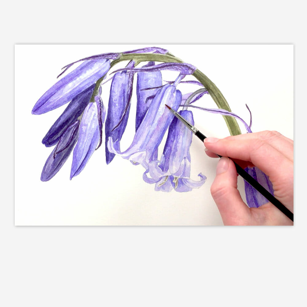 Bluebell Watercolour