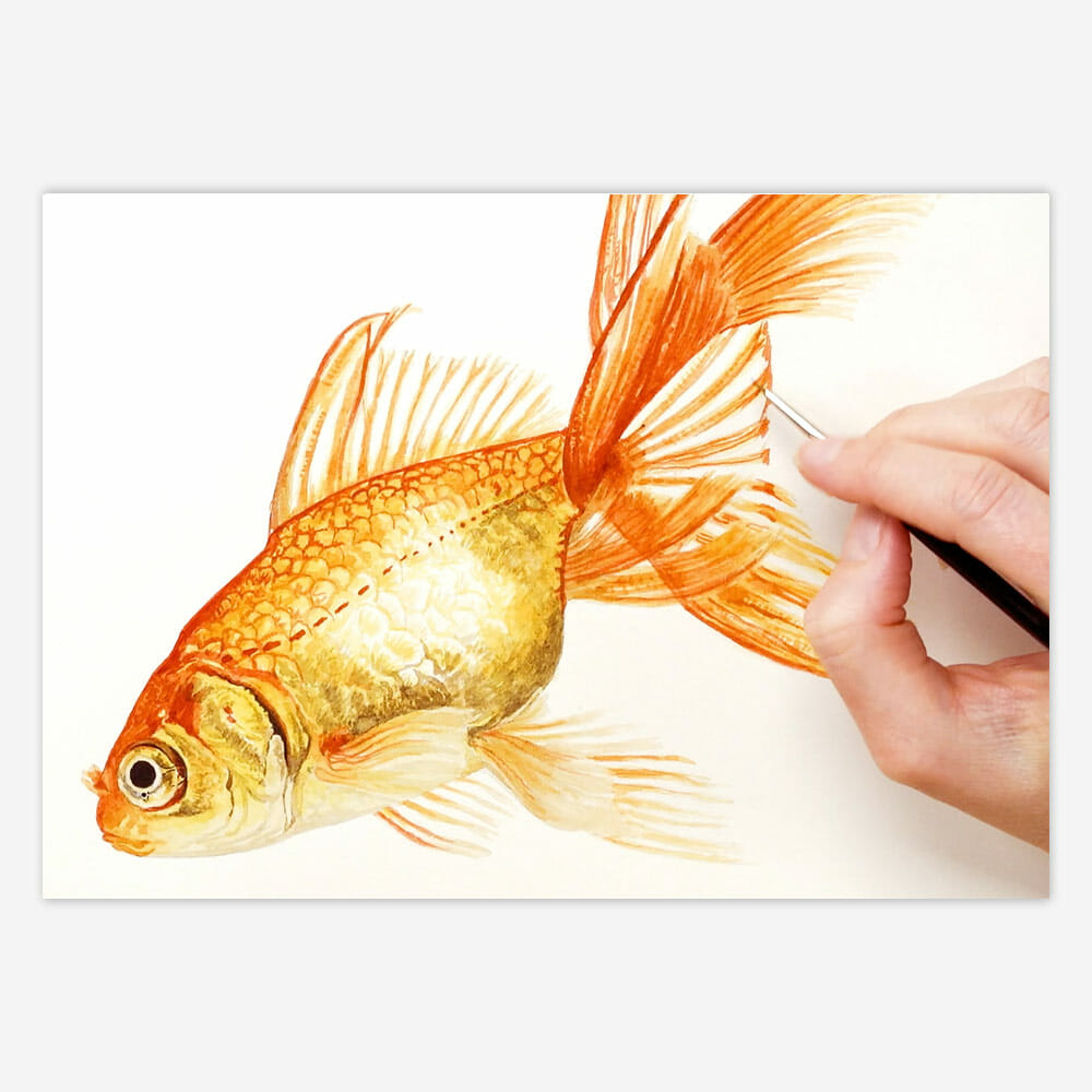 watercolour goldfish shine