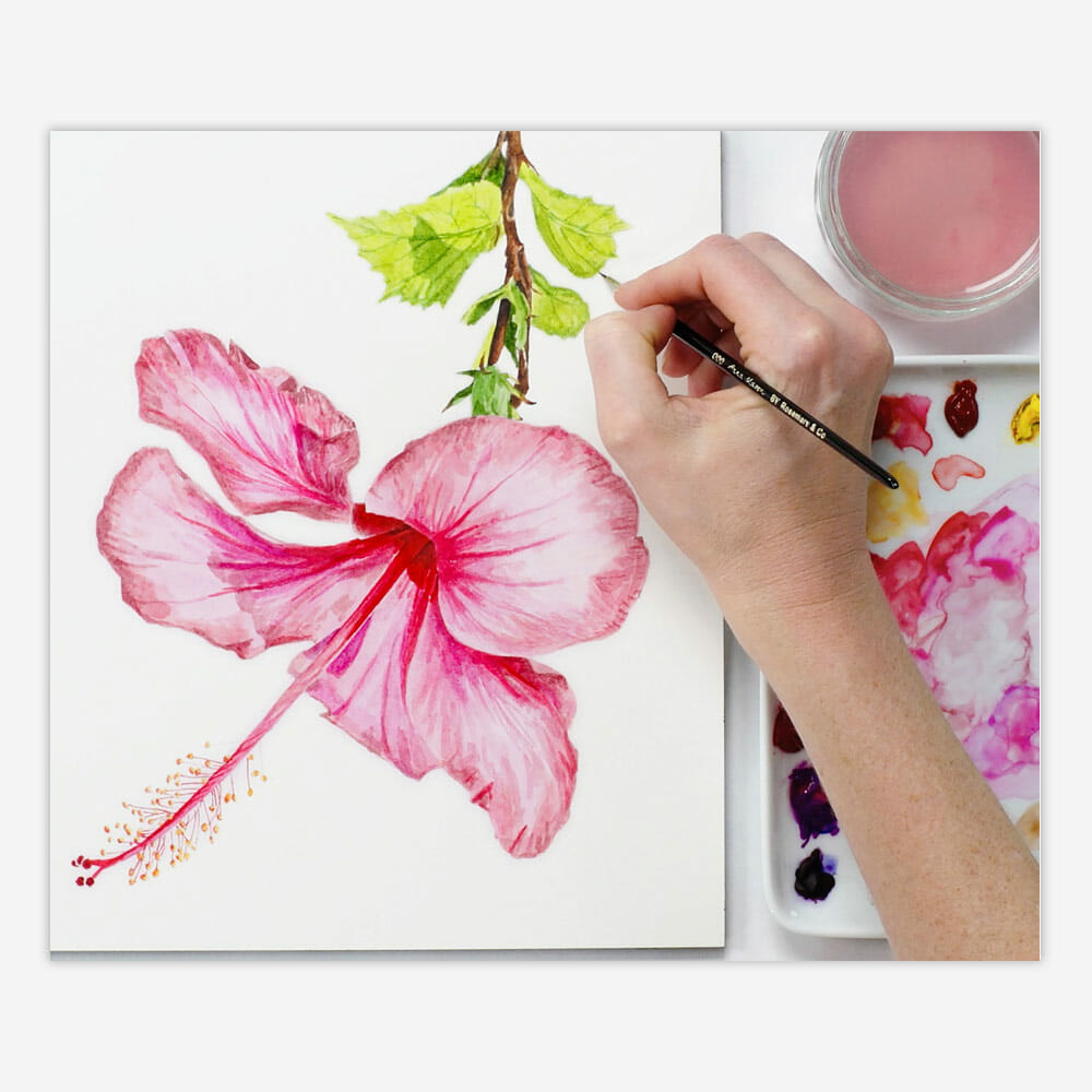 Hibiscus watercolour