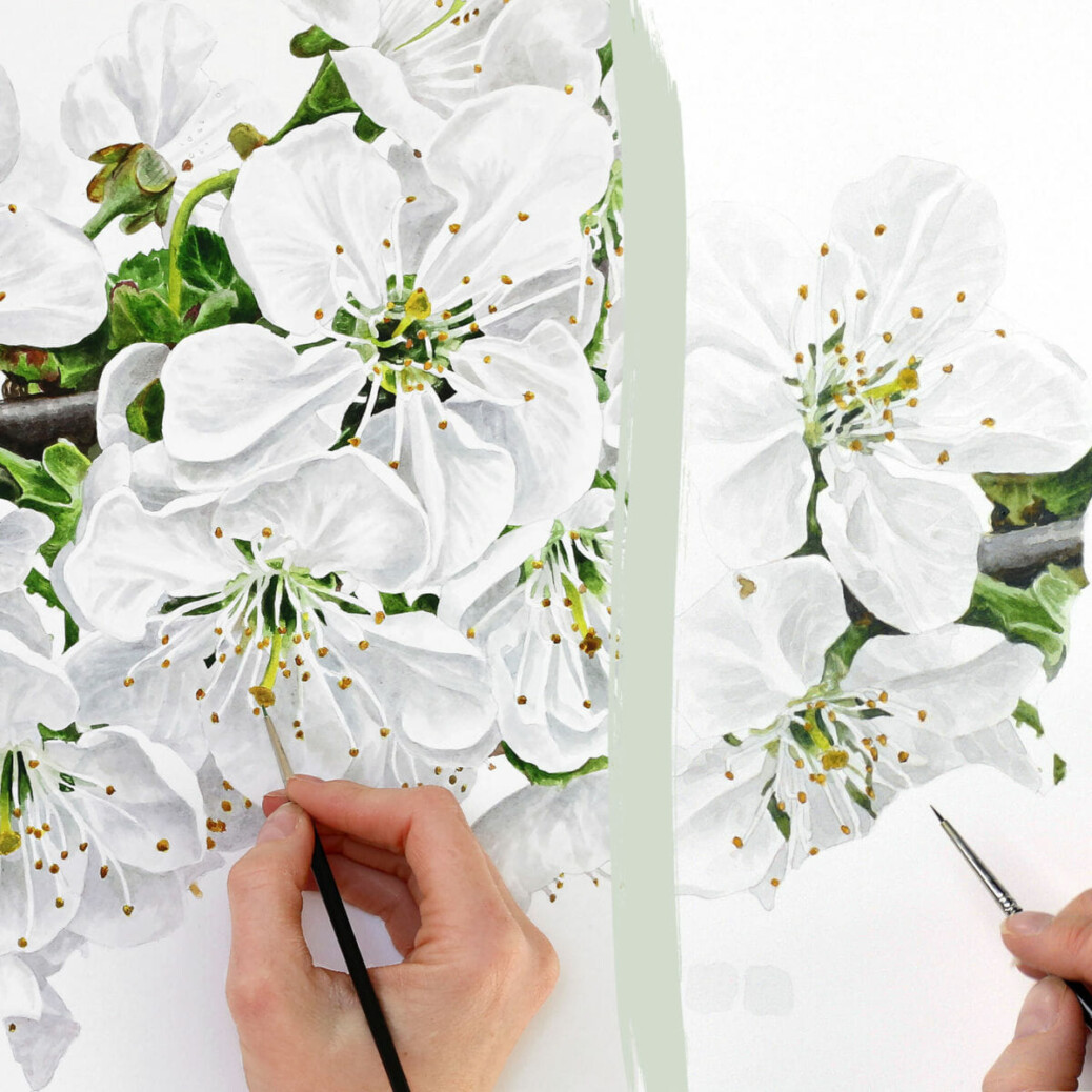 Paint white flowers in watercolour