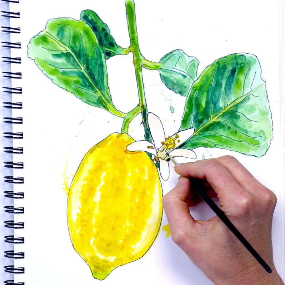 loose watercolour lemon