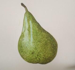 IMG_0914 Pear